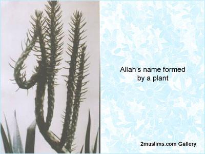 islamic_miraclesallahplant