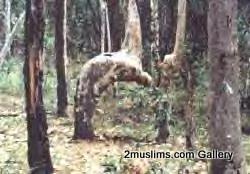 islamic_miraclesawsawspict1