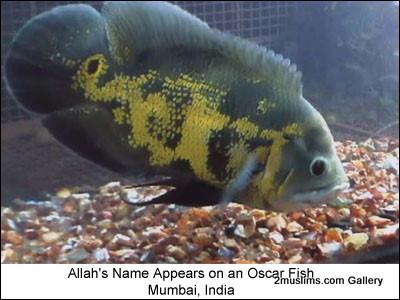 islamic_miraclesoscarfish