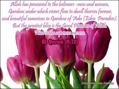 quran_gallery_flowers5