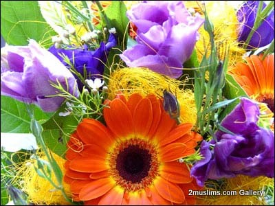 quran_gallery_flowers8